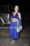Bollywood actress Ameesha Patel at Laila Khan Reception Party (4)